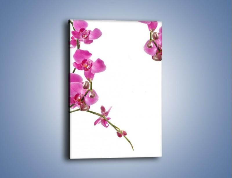 Obraz na płótnie – Gałązki mini storczyków – jednoczęściowy prostokątny pionowy K028
