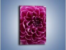 Obraz na płótnie – Dominujący kwiat dalii – jednoczęściowy prostokątny pionowy K056