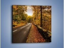 Obraz na płótnie – Asfaltową droga przez las – jednoczęściowy kwadratowy KN169