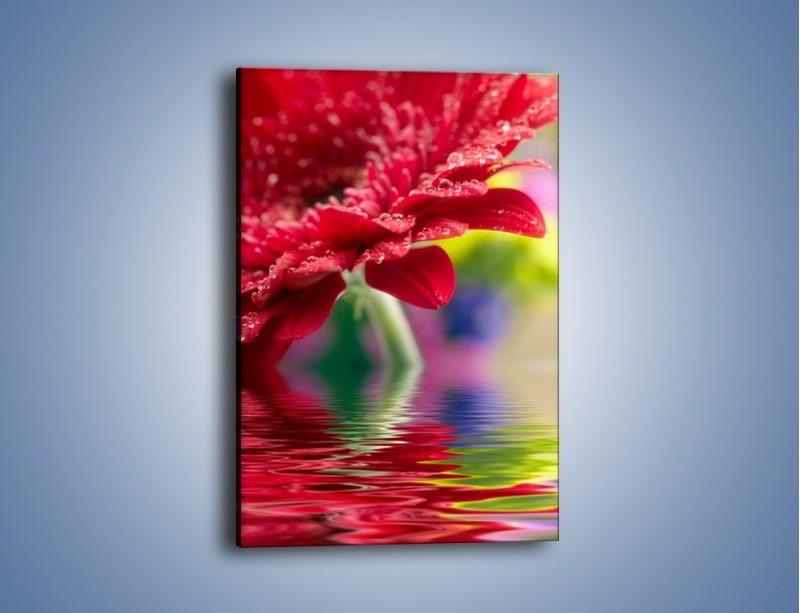 Obraz na płótnie – Bordowy kwiat odbity w wodzie – jednoczęściowy prostokątny pionowy K138