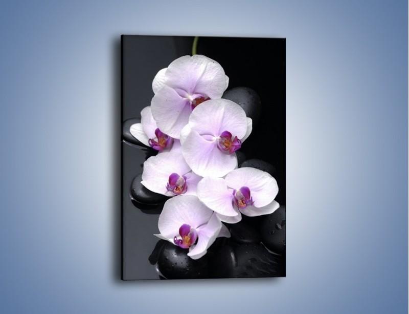 Obraz na płótnie – Biała niewinność storczyka – jednoczęściowy prostokątny pionowy K161