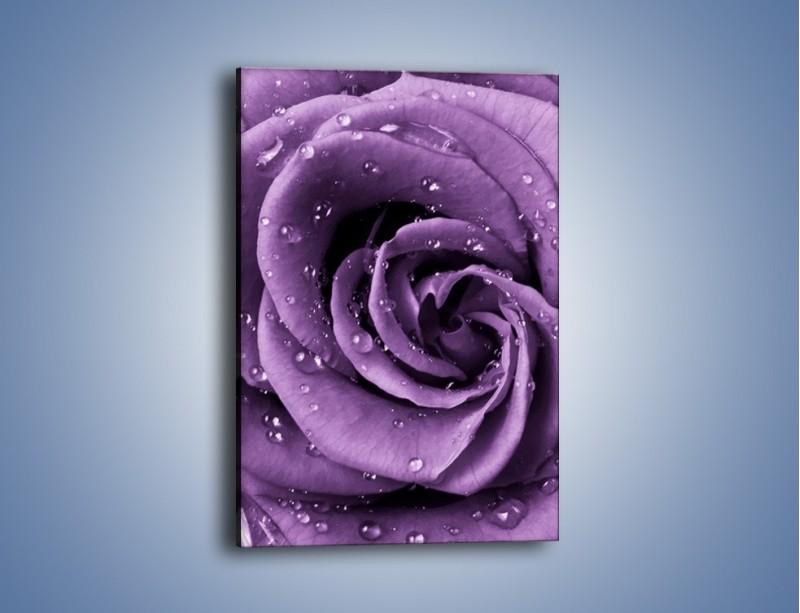 Obraz na płótnie – Głęboki fiolet zachowany w róży – jednoczęściowy prostokątny pionowy K177