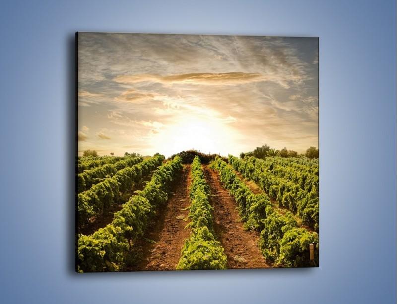 Obraz na płótnie – Spacer między uprawami – jednoczęściowy kwadratowy KN227