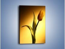 Obraz na płótnie – Tulipan w samotności – jednoczęściowy prostokątny pionowy K286