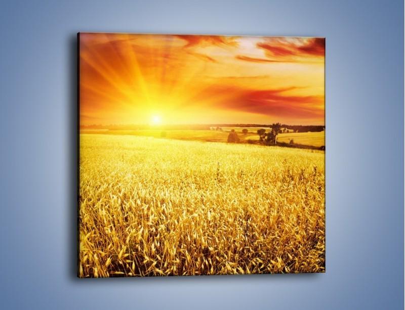 Obraz na płótnie – Zboże złote jak słońce – jednoczęściowy kwadratowy KN398