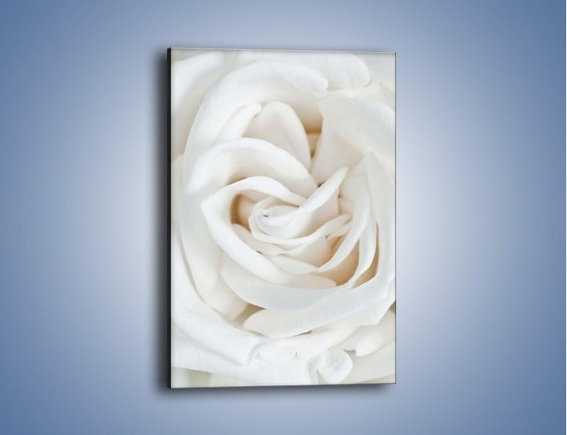 Obraz na płótnie – Biel róży za dnia – jednoczęściowy prostokątny pionowy K709