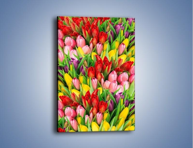 Obraz na płótnie – Cały widok w tulipanach – jednoczęściowy prostokątny pionowy K804
