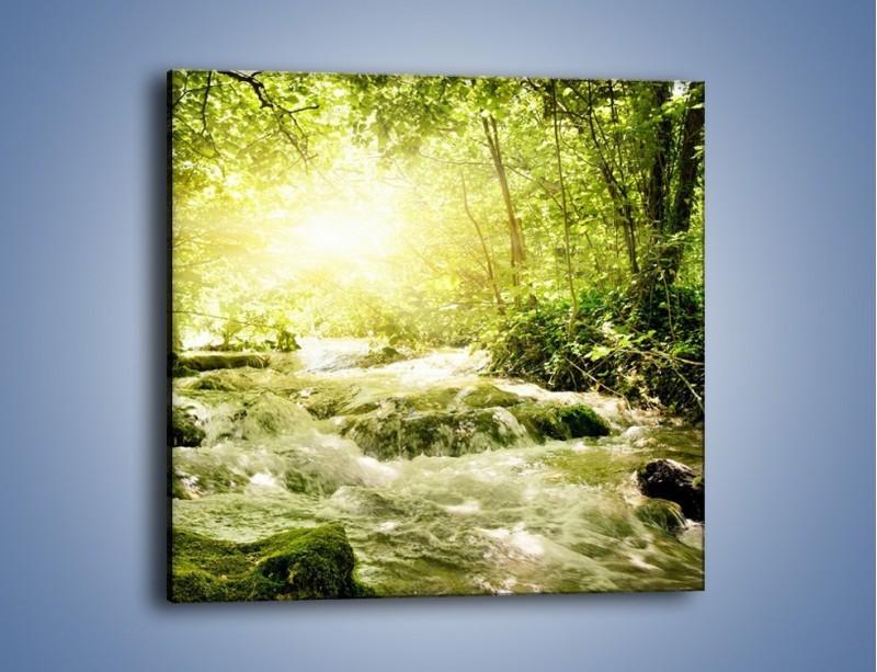 Obraz na płótnie – Wzburzony potok leśny – jednoczęściowy kwadratowy KN508