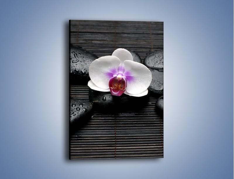 Obraz na płótnie – Biały kwiat na ciemnej macie – jednoczęściowy prostokątny pionowy K874