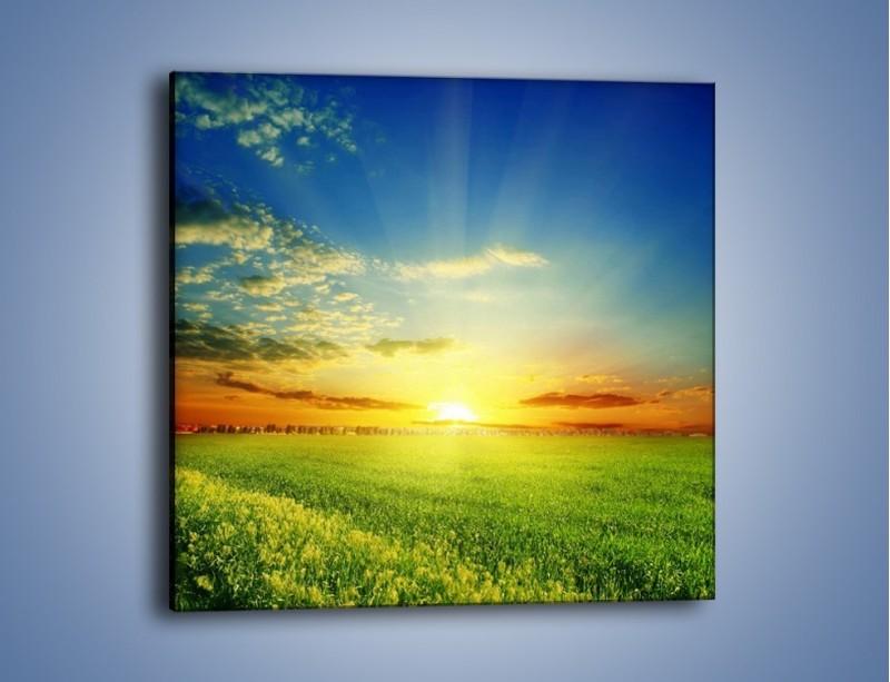 Obraz na płótnie – Łąka pełna zieleni – jednoczęściowy kwadratowy KN542