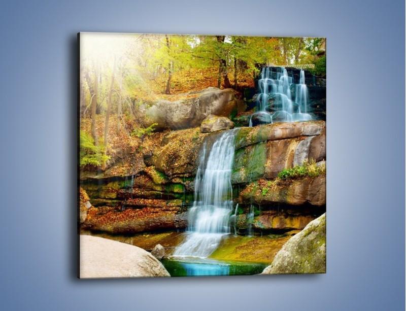 Obraz na płótnie – Leśne podłoże późną jesienią – jednoczęściowy kwadratowy KN563
