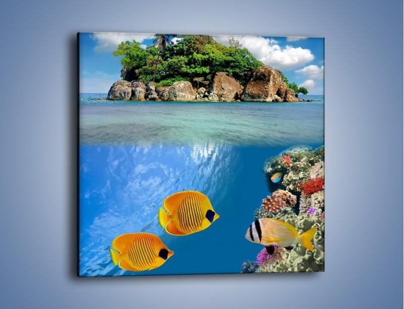 Obraz na płótnie – Podwodny świat na wyspie – jednoczęściowy kwadratowy KN586