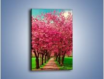 Obraz na płótnie – Aleja kwitnącej wiśni – jednoczęściowy prostokątny pionowy KN1238A