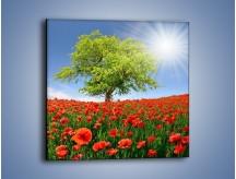 Obraz na płótnie – Cała łąka maków – jednoczęściowy kwadratowy KN623