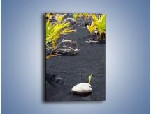 Obraz na płótnie – Dodatki na czarnym piasku – jednoczęściowy prostokątny pionowy KN350