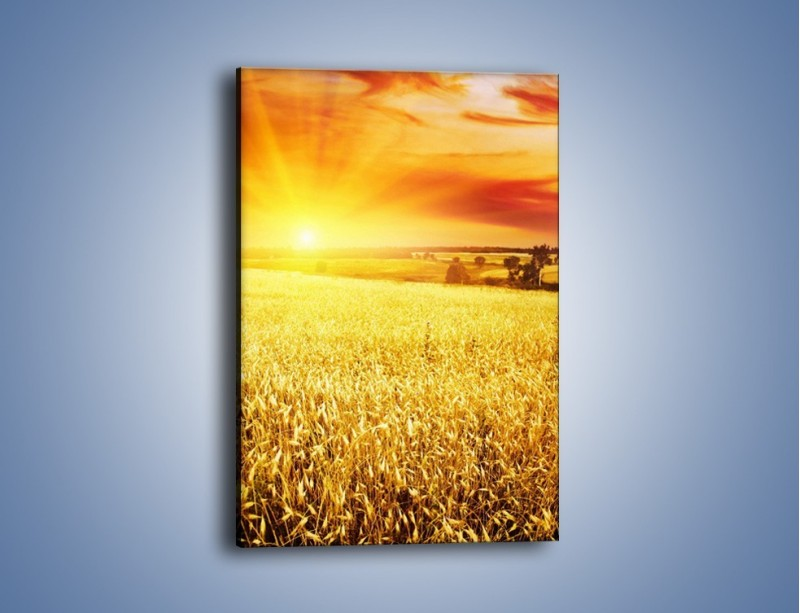 Obraz na płótnie – Zboże złote jak słońce – jednoczęściowy prostokątny pionowy KN398