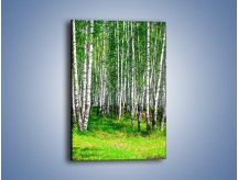 Obraz na płótnie – Brzózki w lasku – jednoczęściowy prostokątny pionowy KN400