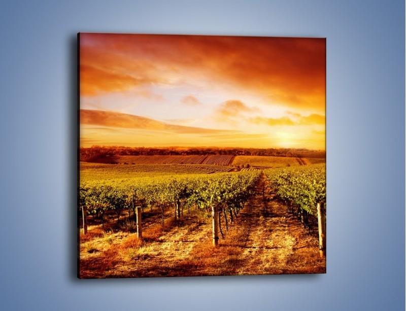 Obraz na płótnie – Ziemia i uprawy – jednoczęściowy kwadratowy KN673