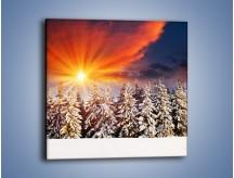 Obraz na płótnie – Choinki w środku zimy – jednoczęściowy kwadratowy KN682