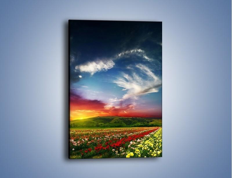 Obraz na płótnie – Kolory tęczy na łące – jednoczęściowy prostokątny pionowy KN552