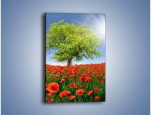Obraz na płótnie – Cała łąka maków – jednoczęściowy prostokątny pionowy KN623