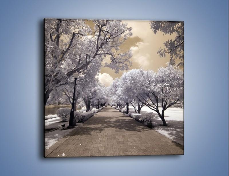 Obraz na płótnie – Parkowa aleja w sepii – jednoczęściowy kwadratowy KN734