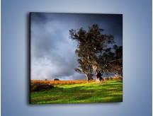 Obraz na płótnie – Burzowe chmury nad polaną – jednoczęściowy kwadratowy KN748