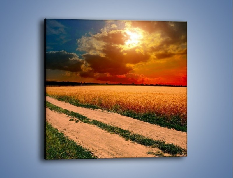 Obraz na płótnie – Zbożowa polana i jej cały urok – jednoczęściowy kwadratowy KN776