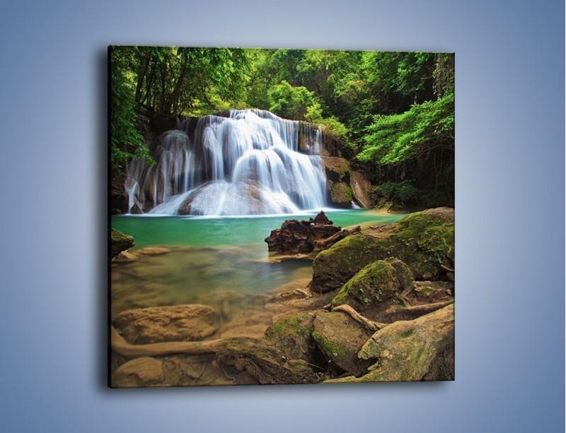 Obraz na płótnie – Drzewa schowane za wodospadem – jednoczęściowy kwadratowy KN792
