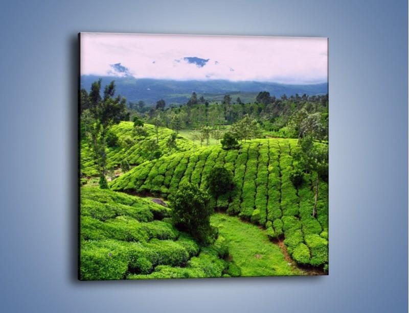 Obraz na płótnie – Rozległa zielona kraina – jednoczęściowy kwadratowy KN872