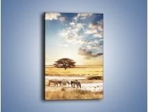 Obraz na płótnie – Zrelaksowane zebry w słońcu – jednoczęściowy prostokątny pionowy Z012