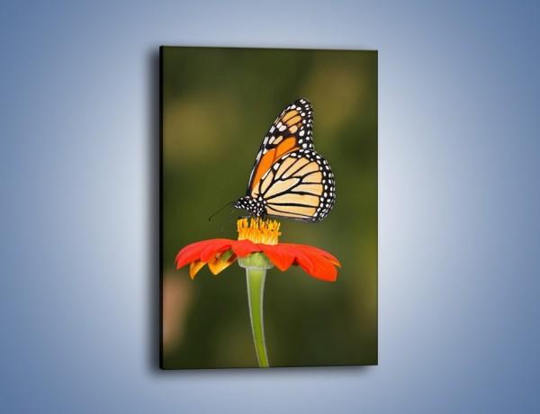Obraz na płótnie – Motyl w kolorach wiosny – jednoczęściowy prostokątny pionowy Z022