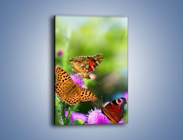 Obraz na płótnie – Świat kolorowych motyli – jednoczęściowy prostokątny pionowy Z053