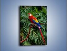 Obraz na płótnie – Papuga z długim ogonem – jednoczęściowy prostokątny pionowy Z078