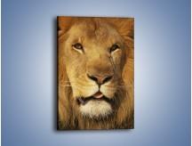 Obraz na płótnie – Senne lwie południe – jednoczęściowy prostokątny pionowy Z090