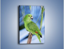 Obraz na płótnie – Zielona papużka i turkus – jednoczęściowy prostokątny pionowy Z092