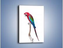 Obraz na płótnie – Papuga w samotności – jednoczęściowy prostokątny pionowy Z098