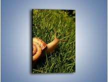 Obraz na płótnie – Z ślimakiem przez łąkę – jednoczęściowy prostokątny pionowy Z103