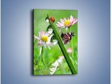 Obraz na płótnie – Spotkanie motyla z biedronką – jednoczęściowy prostokątny pionowy Z109