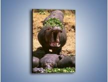 Obraz na płótnie – Hipopotam u dentysty – jednoczęściowy prostokątny pionowy Z117