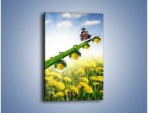 Obraz na płótnie – Odpoczynek motyli w słońcu – jednoczęściowy prostokątny pionowy Z189