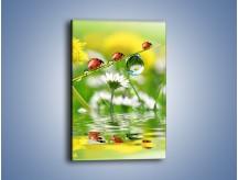 Obraz na płótnie – Wędrówka biedroneczek – jednoczęściowy prostokątny pionowy Z190