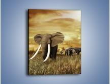 Obraz na płótnie – Drogocenne kły słonia – jednoczęściowy prostokątny pionowy Z214