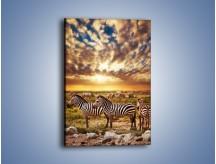 Obraz na płótnie – Zebra w dwóch kolorach – jednoczęściowy prostokątny pionowy Z221