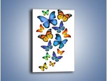 Obraz na płótnie – Kolory lata w motylich skrzydłach – jednoczęściowy prostokątny pionowy Z237