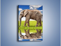 Obraz na płótnie – Odbicie słonia w wodnym lustrze – jednoczęściowy prostokątny pionowy Z245