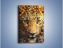 Obraz na płótnie – Najpiękniejsze oczy jaguara – jednoczęściowy prostokątny pionowy Z255