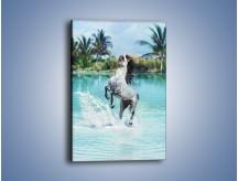 Obraz na płótnie – Wodna kąpiel konna – jednoczęściowy prostokątny pionowy Z267
