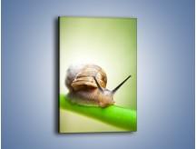 Obraz na płótnie – Ślimak pokaż rogi – jednoczęściowy prostokątny pionowy Z283