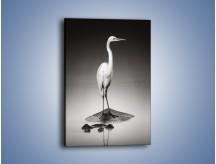 Obraz na płótnie – Samotna czapla wśród wody – jednoczęściowy prostokątny pionowy Z288